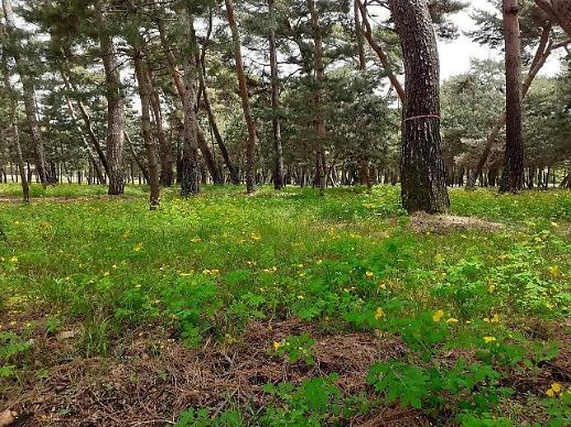11 con đường rừng xanh mát trong lăng mộ hoàng gia triều đại Joseon