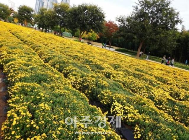 울산에서 봄날을 즐겨요···태화강 정원스토리 페어, 디지털 체험 행사