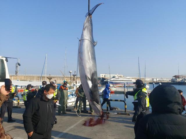 죽은 채 떠다니는 고래 어획·판매도 규제된다…해수부, 고래자원 관련 시행령 개정해