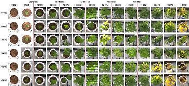노지 밭작물도 디지털 농업…영상 분석·진단 기술 개발