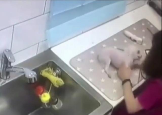 동물 복지 높이고, 영업자 책임 늘리고…반려동물 미용실 CCTV 의무화