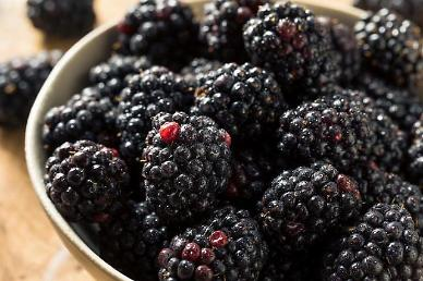 Clinical trails approved to check efficacy of Korean blackberry for cancer treatment