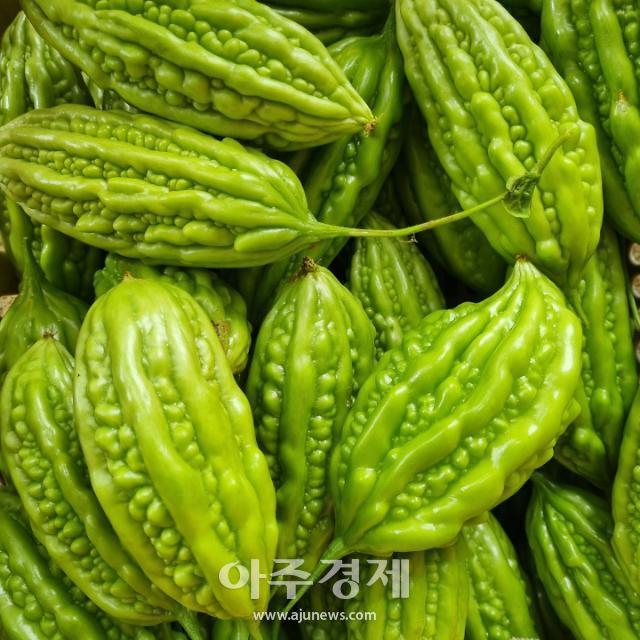 """홍성군 아열대 채소···""""농가 소득에 새바람"""""""