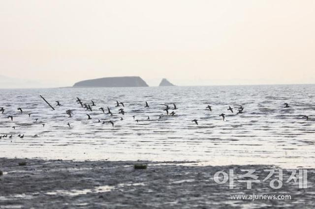해수부, 화성 매향리 갯벌 습지보호구역 지정