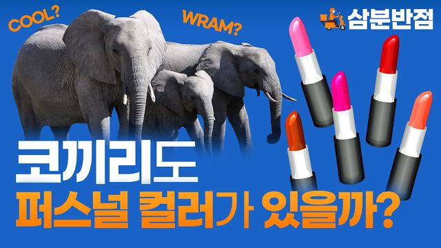 [삼분반점/영상] 코끼리와 같은 동물에게도 퍼스널 컬러가 있을까?
