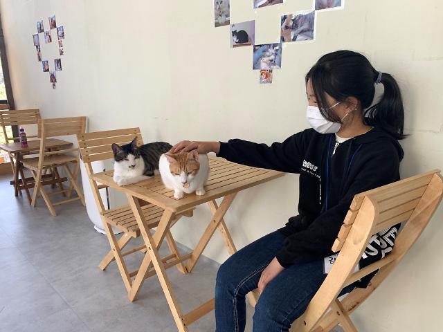 영천시 청소년문화의집, 여름방학 프로그램 참여청소년 모집