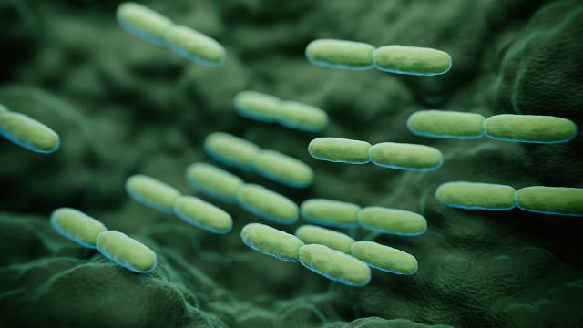 S. Koreas agricultural ministry to establish microbiome resource center to create database