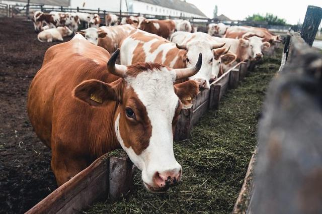 S. Korea to diversify utilization of animal manure for developing efficient biogas