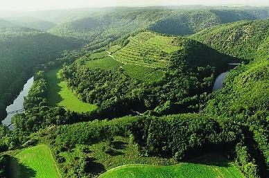 [지금, 여행] 와인의 계절 가을…싱그런 체코 포도밭이 나를 부르네