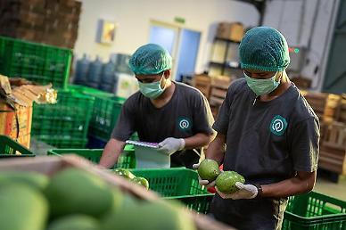 [NNA] [그에게 듣는다] 印尼 코로나 속 성장세 이어가는 타니허브