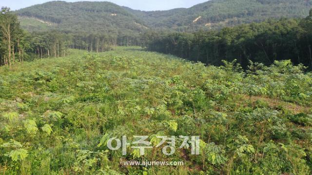 충남도 밀원수 시범단지 '전국 최우수'