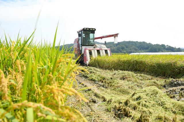 농식품부, 내일부터 공공비축미 34만t 사들인다