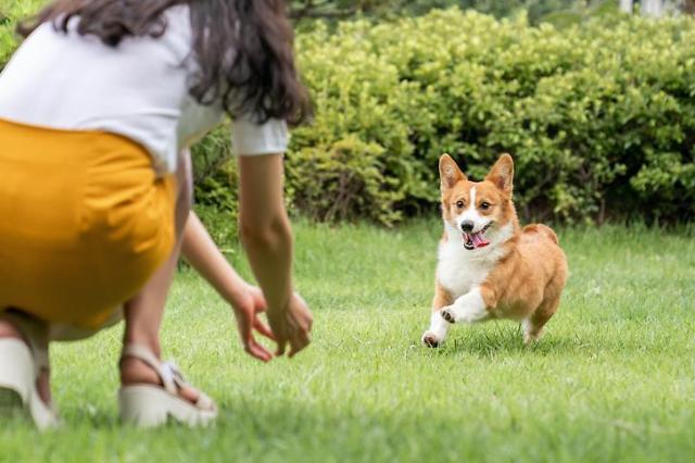 Online fresh grocery unicorn sees 579% spike in pet food sales for S. Korean harvest festival