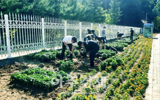 과천시, 주암동 일대 마을 유휴지 꽃길 조성사업 펼쳐