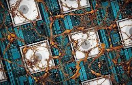 サムスン電子、脳に似た半導体「ニューロモルフィック」チップ技術ビジョンの提示…ハーバード大学研究陣と成果