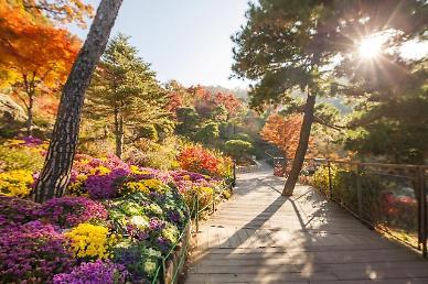 형형색색 가을 단풍...화담숲 물들이다