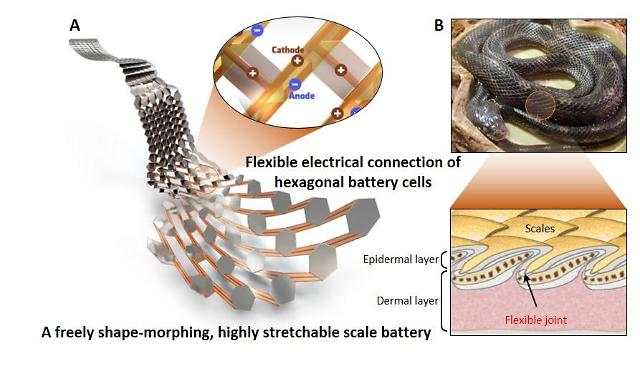 State researchers develop flexible battery shaped like snake scale capable of moving
