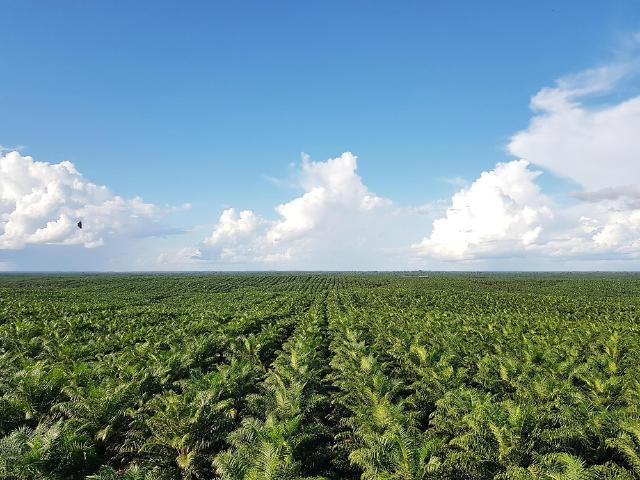 """포스코인터, 팜 사업도 'ESG'…""""印尼 농장 친환경 국제 인증"""""""