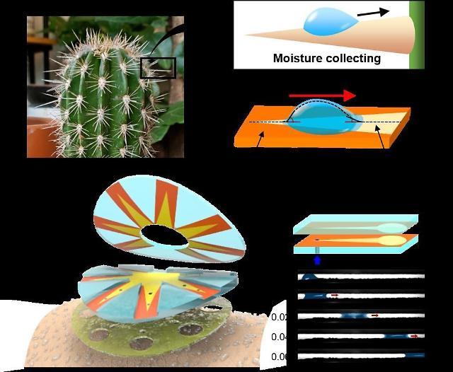 Researchers develop cactus-spine-inspired sweat sensor for non-invasive health monitoring