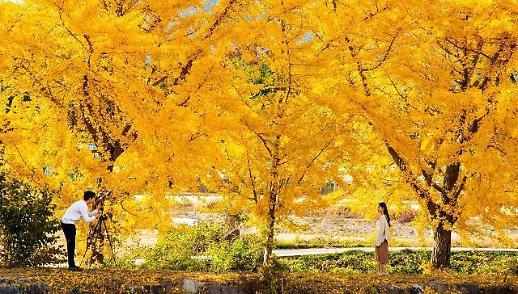 Những điểm nên đến ở Boryeong vào mùa thu