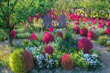 여유·오붓·짜릿…오색빛깔 가을 단풍, 에버랜드에서 만난다