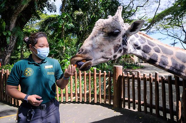 [NNA] 싱가포르 동물원 운영사, 사명 변경… 환경문제 중시