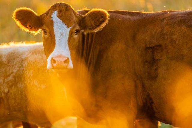 Researchers develop AI-based integrated livestock epidemic prevention platform
