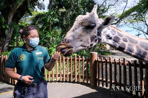 만다이 와일드라이프 그룹, 먹이를 주고 있는 동물원 관계자